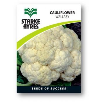 Seed Cauliflower